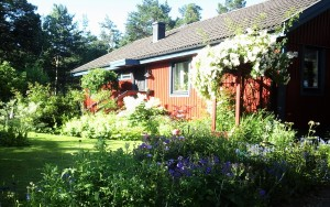 Trädgård 2015-07-01